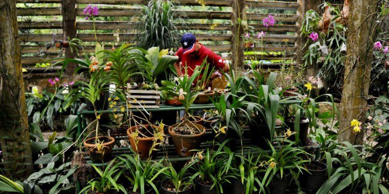 Jardín Botánico Orquideario Soroa, dedicado al cultivo de orquídeas, atesora una colección de plantas de diferentes latitudes del mundo incluyendo especies endémicas de Cuba que se favorecen por el clima de la región; forma parte de la Reserva de la Biosfera Sierra del Rosario en Artemisa, una de las provincias más occidentales de Cuba. 19 de agosto de 2013.   AIN FOTO/Omara GARCÍA MEDEROS/sdl